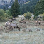 Elk Everywhere